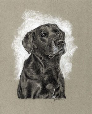 """""""Lab"""" 5"""" x 7"""" Drawing on toned paper"""