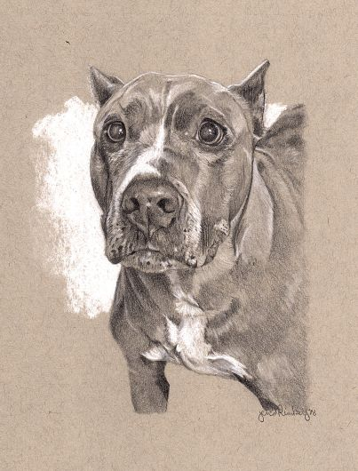 """""""Pit"""" 5"""" x 7"""" Drawing on toned paper"""