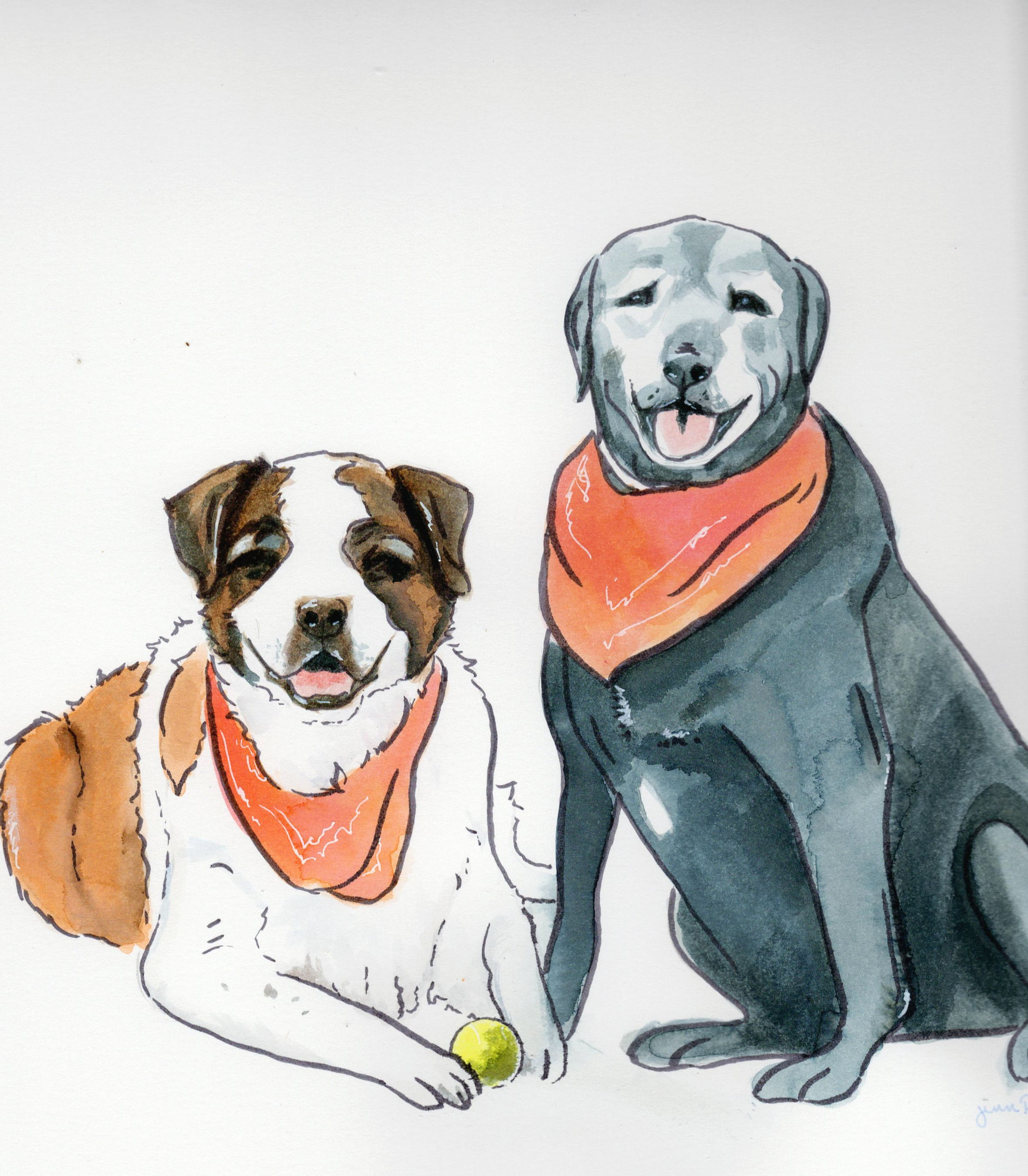 Saint Bernard and Black Lab pet portrait done in minimalist style